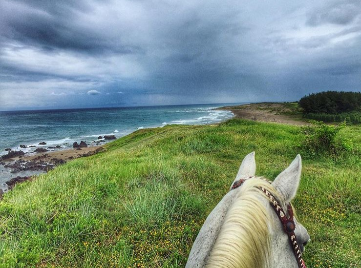 So this is what it looked like it in Veracruz three weeks ago..... Thanks to 🔷 @greciasv 🔷 for sharing her point of view. Hard to decide which one to feature, she's got so many. .......... Tag your photo #lifebetweentheears for a chance to be featured. Ride On! ^^ .......... #betweentheears #equestriantravel #equinephotography #veracruz #gulfofmexico #thankyou #greciasánchez