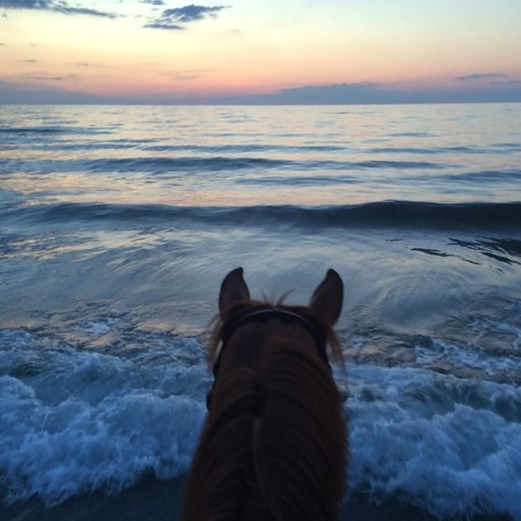 Not only a gorgeous sunset but what a brave pony with the waves coming head on! Thanks to Danish show jumper 🔷 @tina_dufour 🔷 for sharing her point of view! I love seeing show horses out for hacks. ....... #equestrianlife #equestriantravel #equinephotography #showjumper #denmark #hornbaekbeach #thankyou #tinadufour