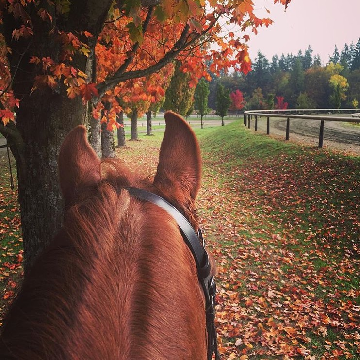Getting some quality Instagram time in while I wait for my car wash.... Just noticed this quintessential fall scene is from my own neck of the woods here in Washington at Donida Farms, one of our local dressage show facilities. Thanks 🔷 @rebzilla_ 🔷 for reminding me how beautiful the grounds are there. ......... #equestrianlife #equestriantravel #equinephotography #showgrounds #auburn #washington #dressage #hack #thankyou #rebecca