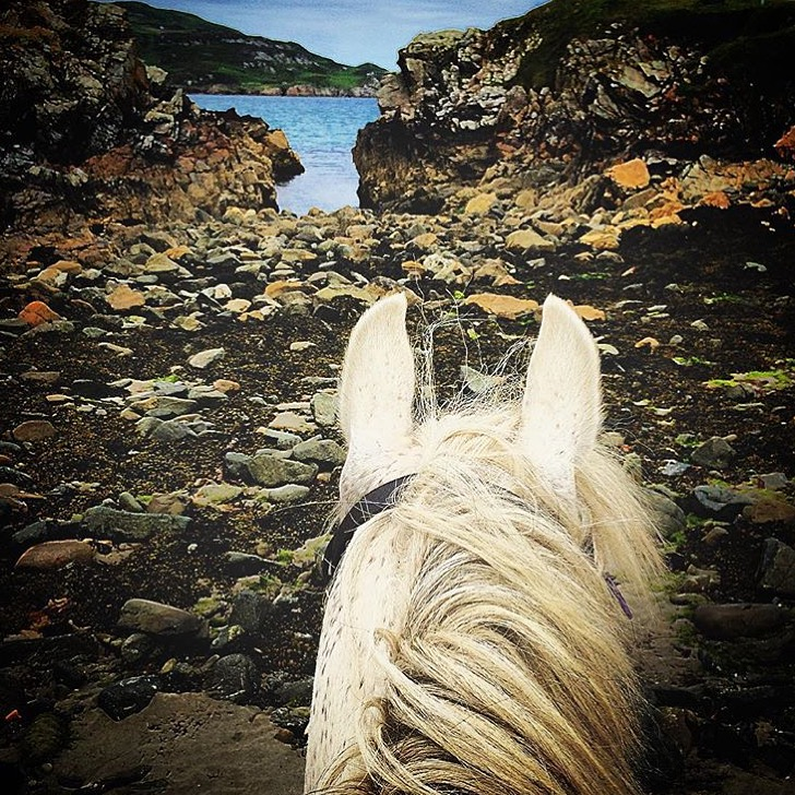 The beaches in Ireland.... Thank you 🔷 @chrisbogues 🔷 on Killahoey Beach, Donegal with horses from @dunfanaghystablesireland. Anyone else adding to their bucket list? Have a great weekend everyone; I headed out of town and will be off the air. Ciao for now! ........ Tag your photo #lifebetweentheears for a chance to be featured. Ride On! ^^ ......... #equestrianlife #equestriantravel #equinephotography #equestrianadventure #killahoeybeach #donegal #ireland #thankyou #chrisbrogues #dunfanaghystables
