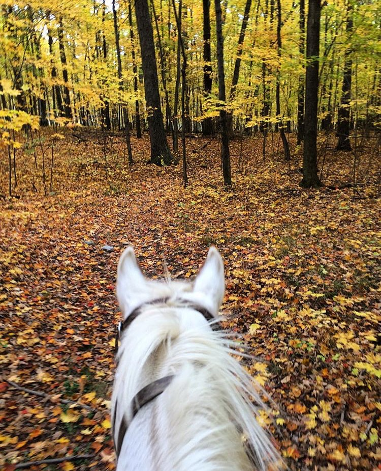 More glowy autumn goodness; this time from 🔷 @paintedbarstables 🔷 in Upstate, New York in the Finger Lakes area.  ........ Tag your photo #lifebetweentheears for a chance to featured. Ride On! ^^ ........ #equestrianlife #equestriantravel #equinephotography #equestrianadventure #autumnleaves #fallcolor #upstatenewyork #fingerlakes #thankyou #paintedbarstables