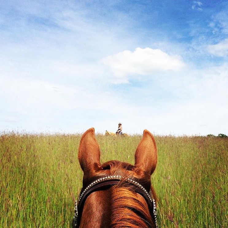 Congratulations to 🔷 @kgrefsrud 🔷 for getting this cool photo along with some of her others published in her local paper, chronically rural life in Minnesota! ...... Tag your photo #lifebetweentheears for a chance to be featured. Ride On! ^^ ........ #equestrianlife #rural_love #equinephotography #minnesota #mapplewoodstatepark #congratulation #archersmom