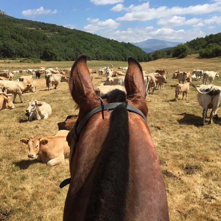 According to 🔷 @uma1104 🔷, who is from the Basque country, this is the little town in Spain where her great grandparents grew up. How cool is that? ........ Tag your photo #lifebetweentheears for a chance to be featured. Ride On! ^^ ....... #equestriantravel #equestrianadventure #basque #spain #dehesademontejo #thankyou #uma