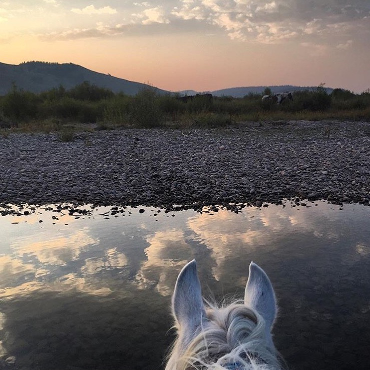 Thank you 🔷 @liz_appa 🔷 Liz Stewart. Wowzers. ✨  ....... Tag your photo #lifebetweentheears for a chance to be featured. Ride On! ^^ ......... #equestrianlife #equestriantravel #equinephotography #wyoming #bondurant #grosventre #thankyou #lizstewart