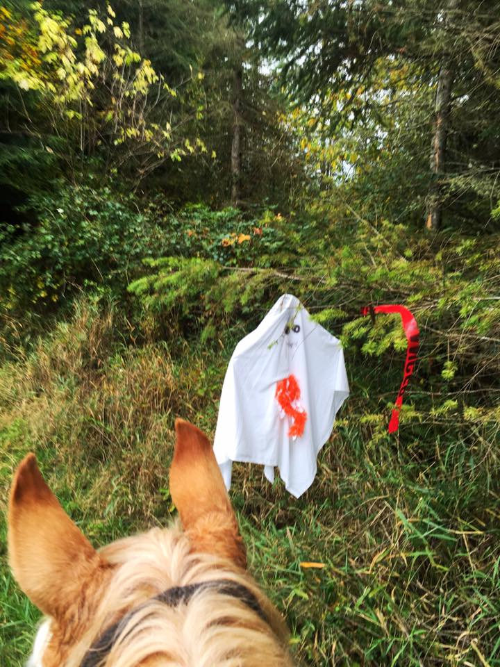 This just in from my friend Ellen Felsenthal aboard Harmony near Arlington, Washington. Totally scary. Totally. 👻 ........ Tag your photo #lifebetweentheears for a chance to be featured. Ride On! ^^ ......... #happyhalloween #boo #scaryshit #equinephotography #arlington #washington #thanks #ellenfelsenthal