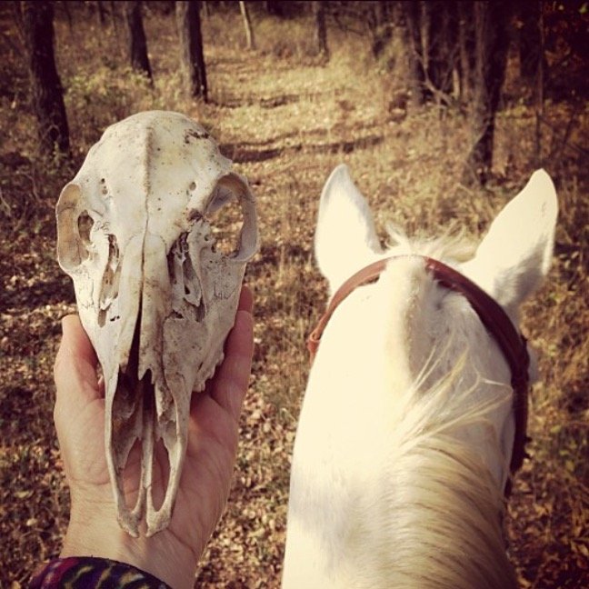 Ahhhhhhhh!  Thanks to 🎃 @shadowhorse13 🎃 Kathy Wismer in Kansas for this spooky shot In Kansas.  ......... Tag your photo #lifebetweentheears for a chance to be featured. Ride On! ^^ ......... #happyhalloween #boo #skulls #kansas #equestrianphotography #equestriantravel #thankyou #kathywismer