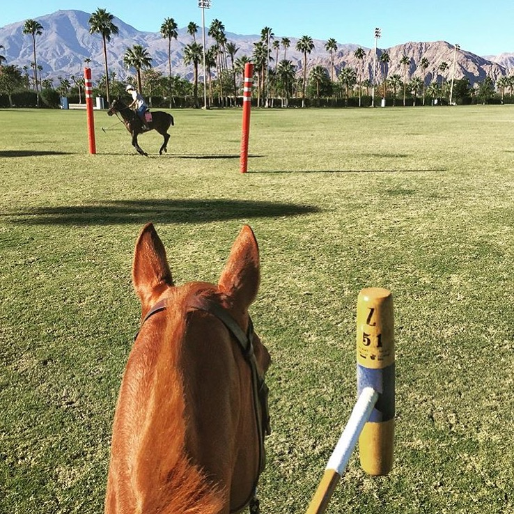Nice to see my Insta-friend 🔷 @zintapolo 🔷 is back on the field, especially as I am tucked inside today with torrential rain and even some thunder here. I would really love to learn to play someday. ....... Tag your photo #lifebetweentheears for a chance to be featured. Ride On! ^^ ....... #equestrianstyle #losangeles #sunnyandwarmagain #equinephotography #losangeles #thankyou #zinta