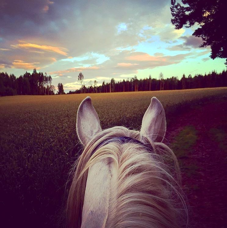Can't get over the beautiful light quality of Norway. Thank you 🔷 @lisagrimnes 🔷 for capturing it aboard your spectacular Andalusian. ........ Tag your photo #lifebetweentheears for a chance to be featured. Ride On! ^^ ...... #equestrianphotography #equestriantravel #norway #instahub #thankyou #lisagrimnes