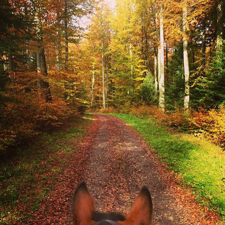 While many of us are on the brink of winter, some of us are still enjoying stunning fall color. Thank you 🍁 @anjakyra_photography 🍁 for sharing your point of view in Switzerland.  ....... Tag your photo #lifebetweentheears for a chance to be featured. Ride On! ^^ ....... #equestriantravel #equestrianphotography #fallcolor #lacote #switzerland #thankyou #anjakyraphotography
