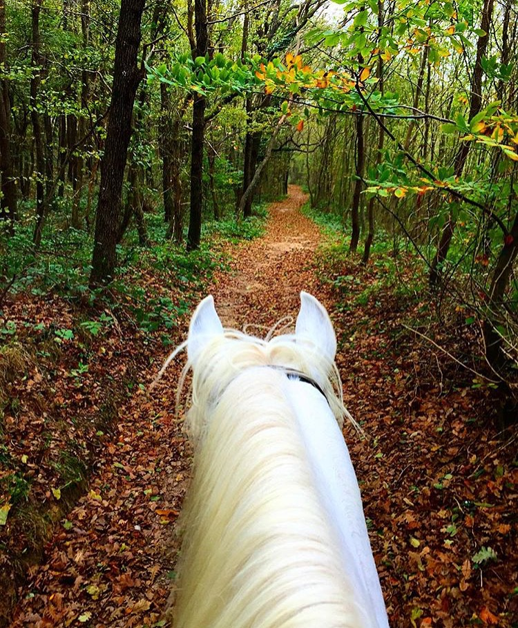 Not the landscape I typically associate Turkey. Thanks to 🔷 @cealtun 🔷/ Cem Altunkaynak who says this is one of the last remaining forests of Instanbul. ......  Tag your photo #lifebetweentheears for a chance to be featured. Ride On! ^^  ........ #equestriantravel #equestrianphotography #istanbul #lastforest #turkey #thankyou #cemsltunkaynak