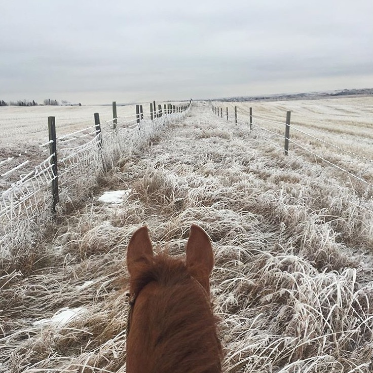 Thanks to cowgirl blogger 🔷 @withawesterntwist 🔷 for this frosty beauty in Alberta, Canada. I can't help but notice there are fewer big snow photos this year compared to last. Think Snow! ❄️  ........  Tag your photo #lifebetweentheears for a chance to be featured. Ride On! ^^  .......  #equestrianphotography #horsesofinstagram #frostygoodness #alberta #canada #thankyou #withawesterntwist