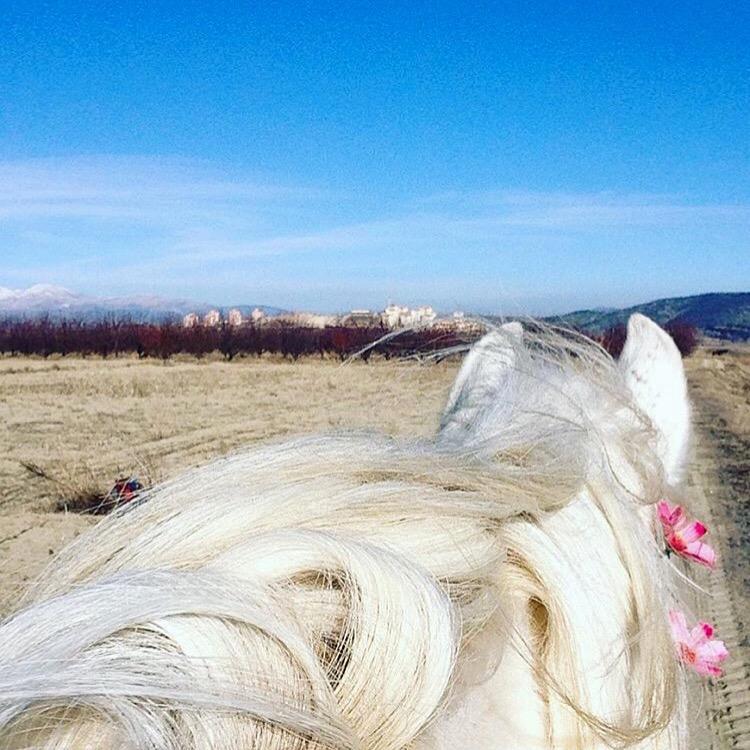 pinkfarmwhitehorse.jpg
