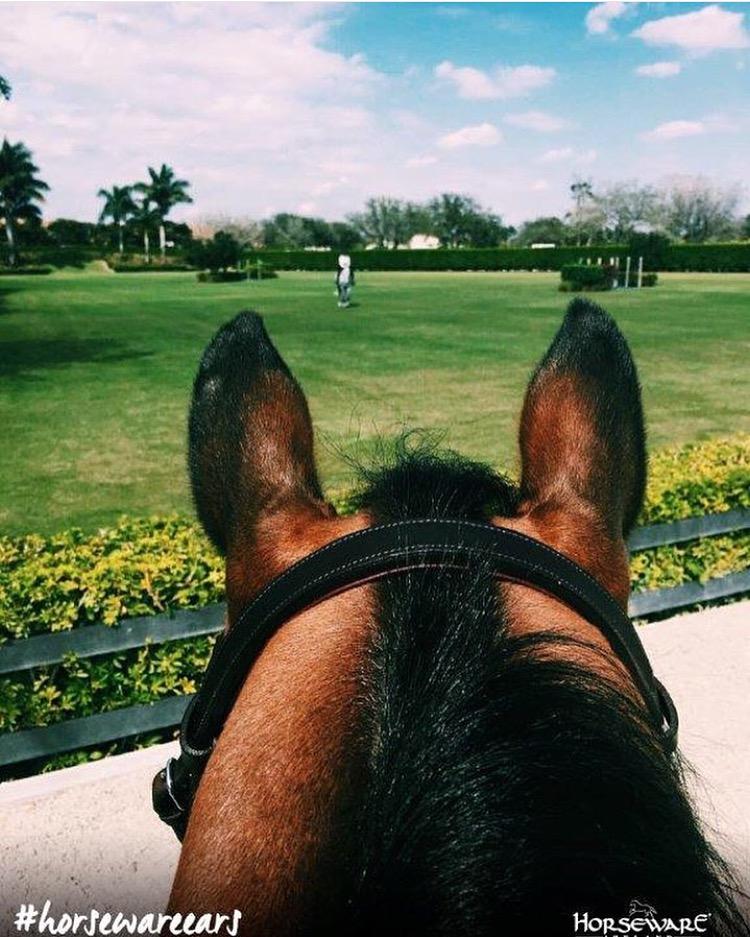 horsewear.jpg