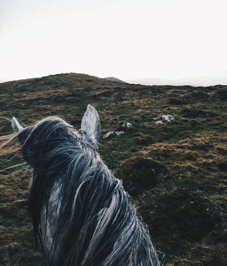Good morning Life Between the Ears-ers and happy St. Patrick's Day! This is @betweentwoears bringing you the second annual Irish takeover. Throughout the day I'll be bringing you some of my favourite views from my past twelve months of roaming Ireland on horseback ~ first up is one I know Kristine from LBTE loves, winter wandering on the mountains of the Dingle Peninsula on a trusty Connemara pony. It was cold, wild and the dead of winter, but an exhilarating experience I highly recommend. #LBTExB2E