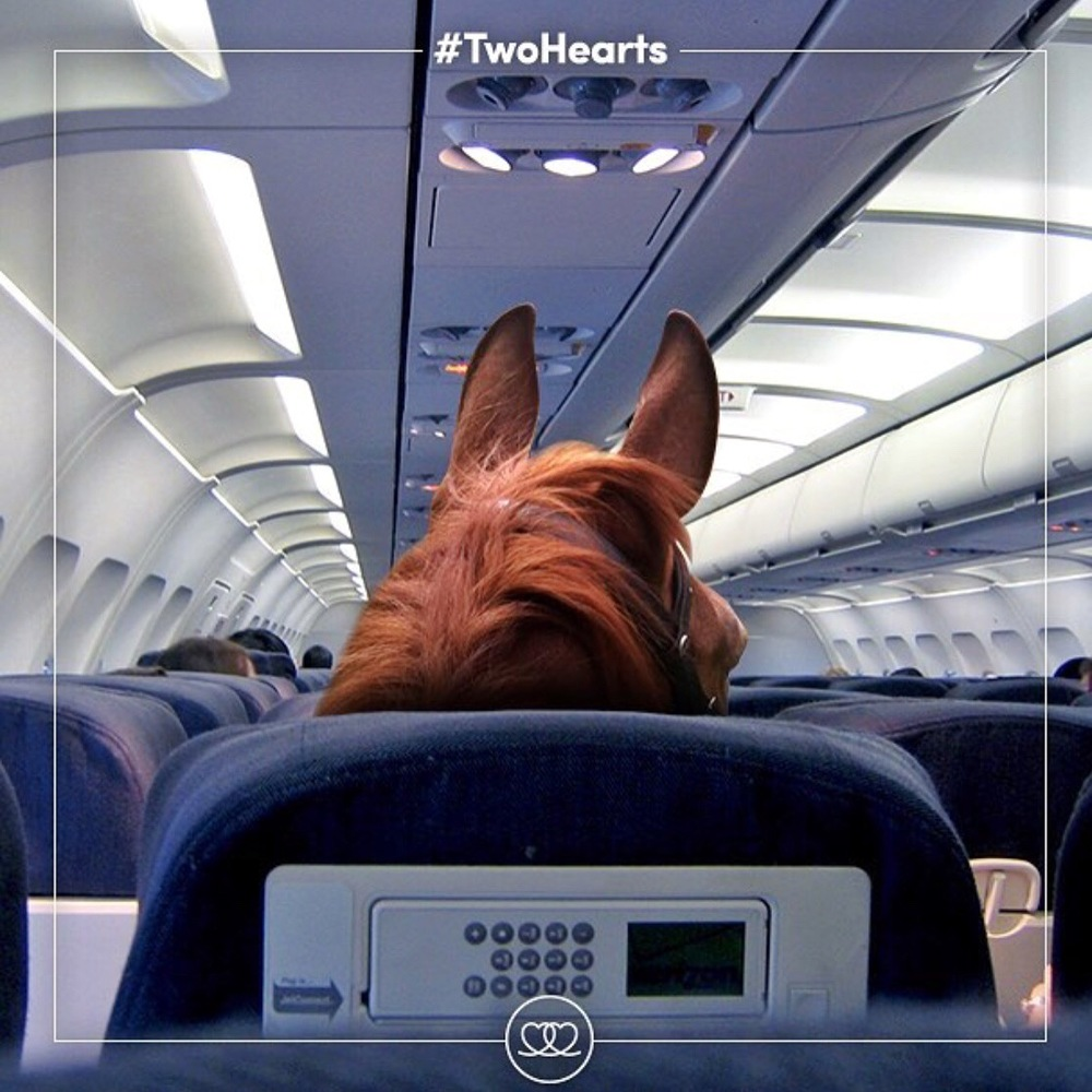 Two days until The Olympics in Rio begin for equestrians! Thanks to 🔷 @fei_global 🔷 for sharing this photo of, you know, the horses headed to Rio.... on First Class. 😉 Equestrian sports are at risk in the Olympics. Please tag your posts about Olympic equestrians with 🔷 #TwoHearts 🔷 and 🔷 #JoinTheJourney 🔷 to help show support for our sport and ensure that we remain part of the Olympics. Read more about it here: http://www.noellefloyd.com/watch-rio-olympics-equestrian-sports/  Thank you to 🔷 @noellefloydmagazine 🔷 for bringing these hashtags to our attention. Eventing begins Saturday 8/6 - Tuesday 8/9, Dressage begins Wednesday 8/10 - Friday 8/12, and Jumping begins Sunday 8/14 - Friday 8/19. Below is a link to the Equestrian Schedule according to different timetables for the Olympics:  http://time.unitarium.com/rio-2016/Equestrian Tag your photo #lifebetweentheears for a chance to be featured. Ride On!  #theworldfromasaddle #rideon #equestriangreetingcards #tinyvacationinabox #equestrianphotography #eventing #dressage #showjumping #equestrianolympics #31summerolympics #2016summerolympics #rio #thankyou #feiglobal #noellefloydmagazine #equestriansportsresource #twohearts #jointhejourney