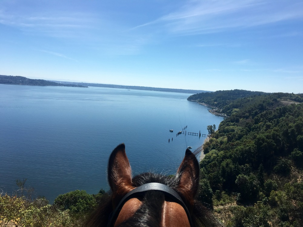 Quintessential summer Sunday ride in my hood on Vashon Island in my favorite spot overlooking Puget Sound.  And inaugural ride in my new Rambo Micklem Bridle from 🔷@Horseware. 🔷 My Welsh Cob is extremely head and poll sensitive so I've been anxious to try this bridle - Happy to report no head tossing and less fussiness. I think they're onto something; it avoids the major pressure points on the horses's head.  I watched this video on Youtube to understand how it works. Anxious to try it in my dressage work. Thanks so much 🔷 @horseware 🔷! 😘 Buy it here. https://www.horseware.com/na/   https://www.youtube.com/watch?v=qDX2ueu7jbs&autoplay=1&app=desktop A Bridle for Unrivaled Comfort Designed to comfortably fit the shape of the horse's skull, avoiding pressure on sensitive areas. The Micklem Competition bridle is a show quality bridle made from hand finished leather with soft padding on the headpiece, browband, noseband and cheekpieces. Comes with tongue protection bit clips and 2 sets of bit straps. Cannot be used as a bit-free bridle or lunge Cavesson. Show quality rubber reins included. http://shop.horseware.com/p/rambo-micklem-original-competition-bridle Tag your photo #lifebetweentheears for a chance to be featured. Ride On! #theworldfromasaddle #rideon #equestriangreetingcards #penandpaper #snailmail #bestequestriangifts #tinyvacationinabox #pinterest #equestrianphotography #sundayfunday #pugetsound #vashonisland #mauryisland #thankyou #horseware #rambo #comfortbridle #micklembridle