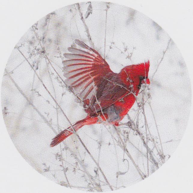 Cardinal-sticker.png