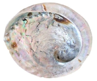 Mother of Pearl Shell.jpg