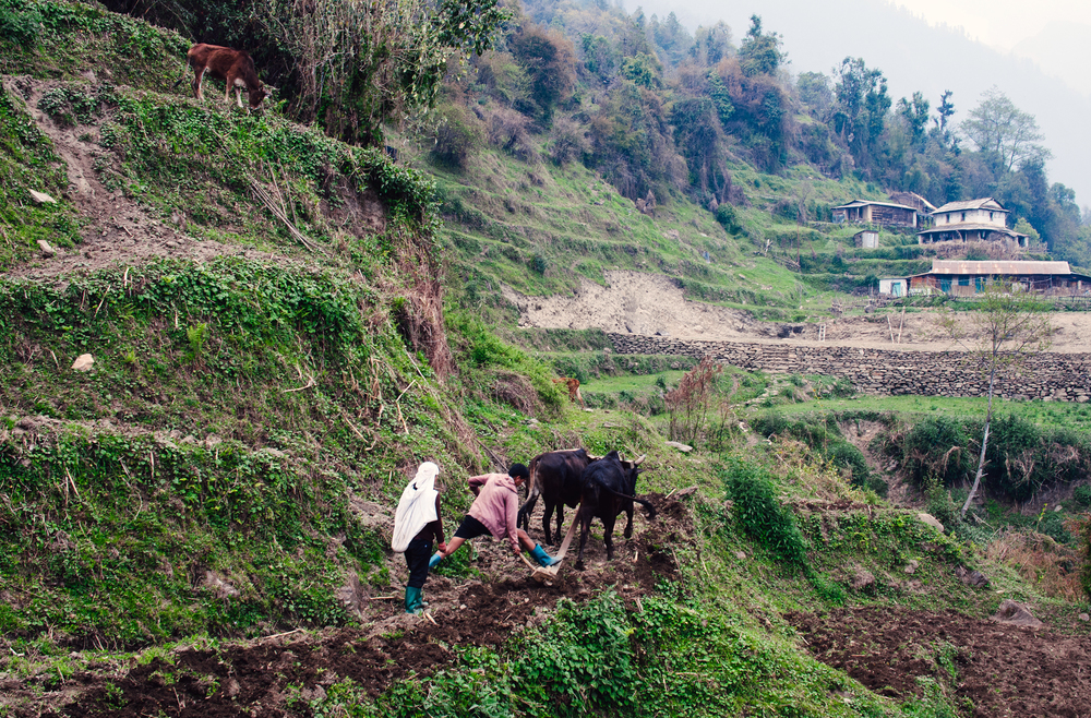 A couple plough a patch of terraced mountain-side outside the village of Chomrong.