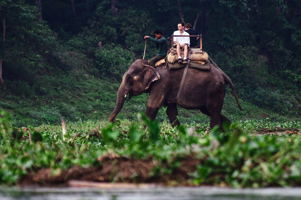 Chitwan.jpg