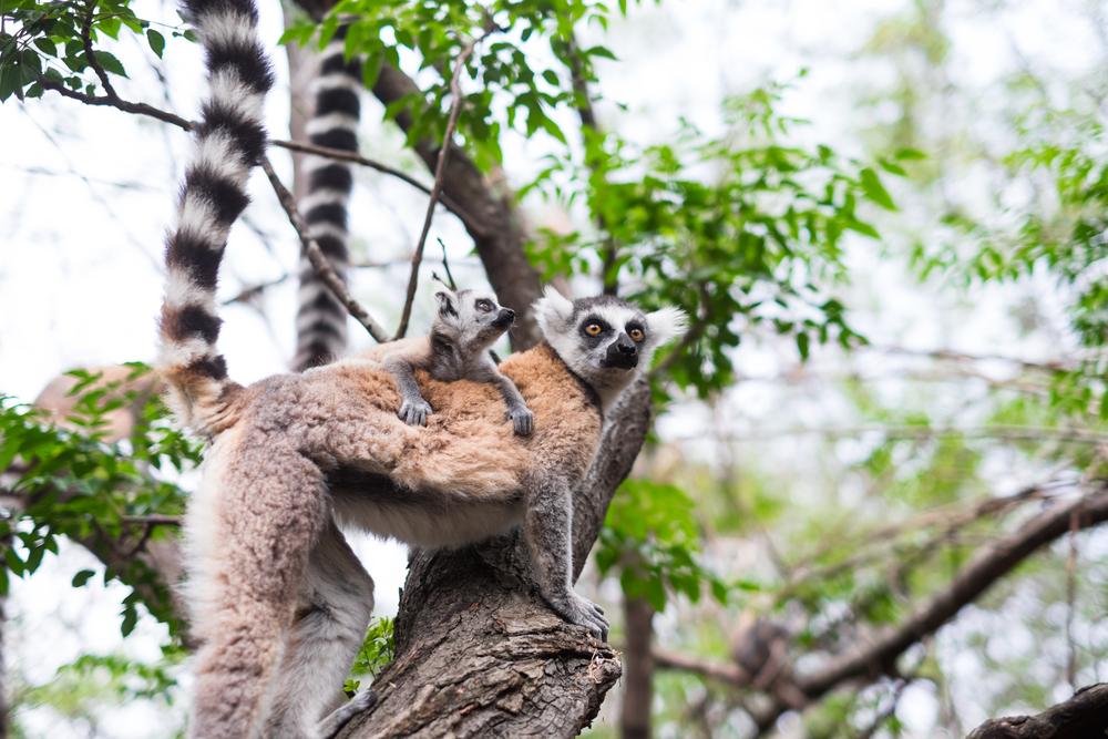 Reserve D'Anja, Madagascar. 2014.