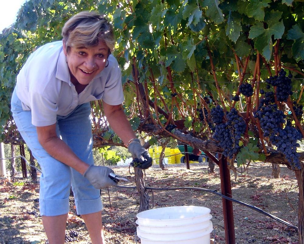 2 Connie Mitchel picking