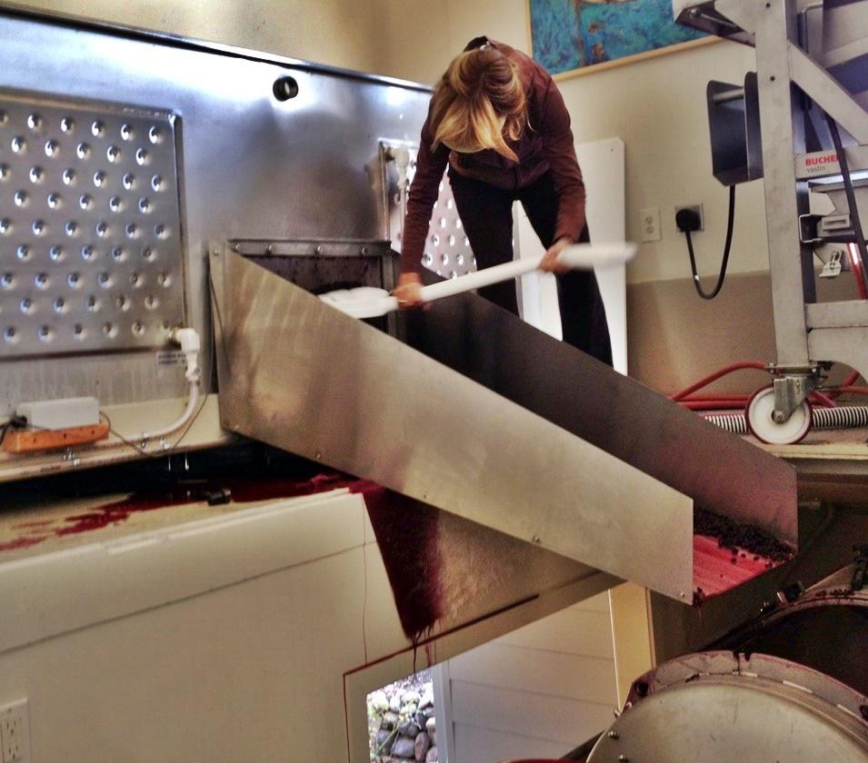 1 Donna unloading fermentation tank into press