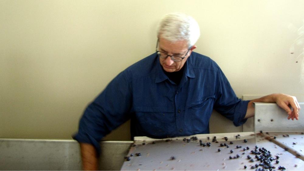 7 Steve Rossi sorting berries