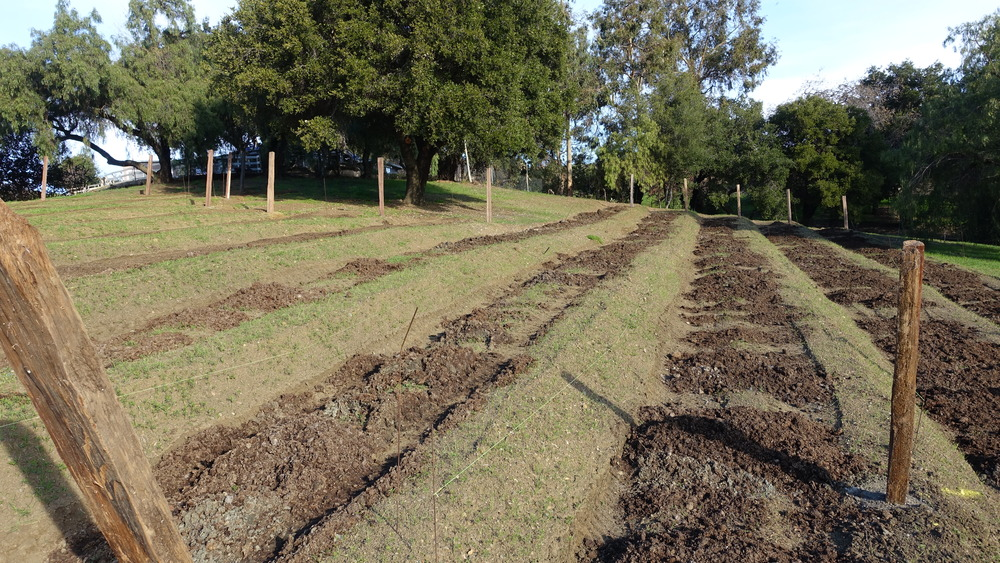 3 Spread compost and fertilizers