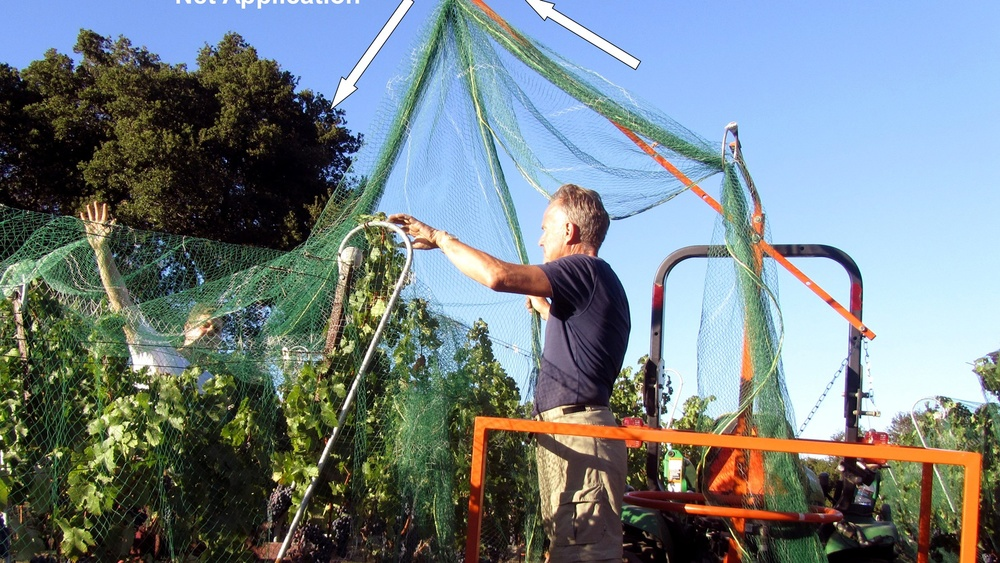 5 Netting: protect from birds