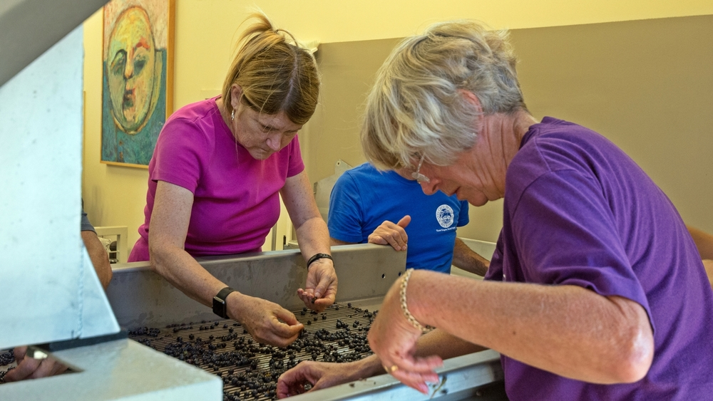 Berry sorting - Andy & Jane