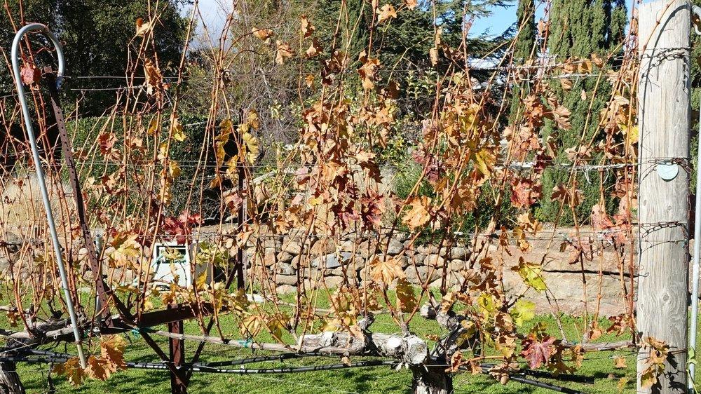 14 December: Leaves have fallen off