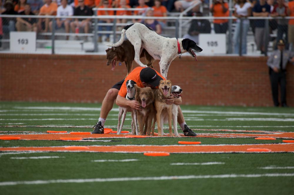 dog pyramid.jpg