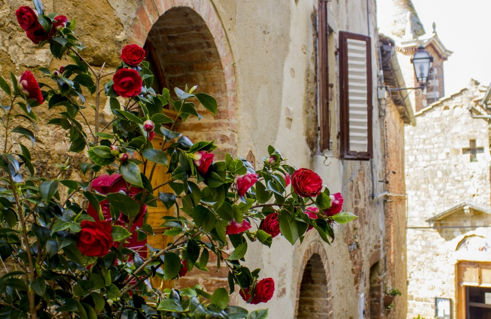 roses-in-tuscany-montisi-e1401199232919-1000x650.jpg