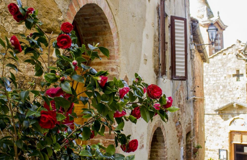roses-in-tuscany-montisi-e1401199232919-1000x650.jpg
