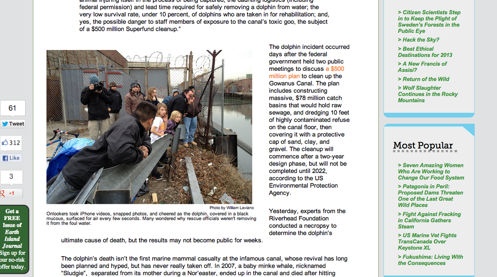 Earth Island Journal  article about a dolphin that died in the Gowanus Canal. Article by Adrian Brune