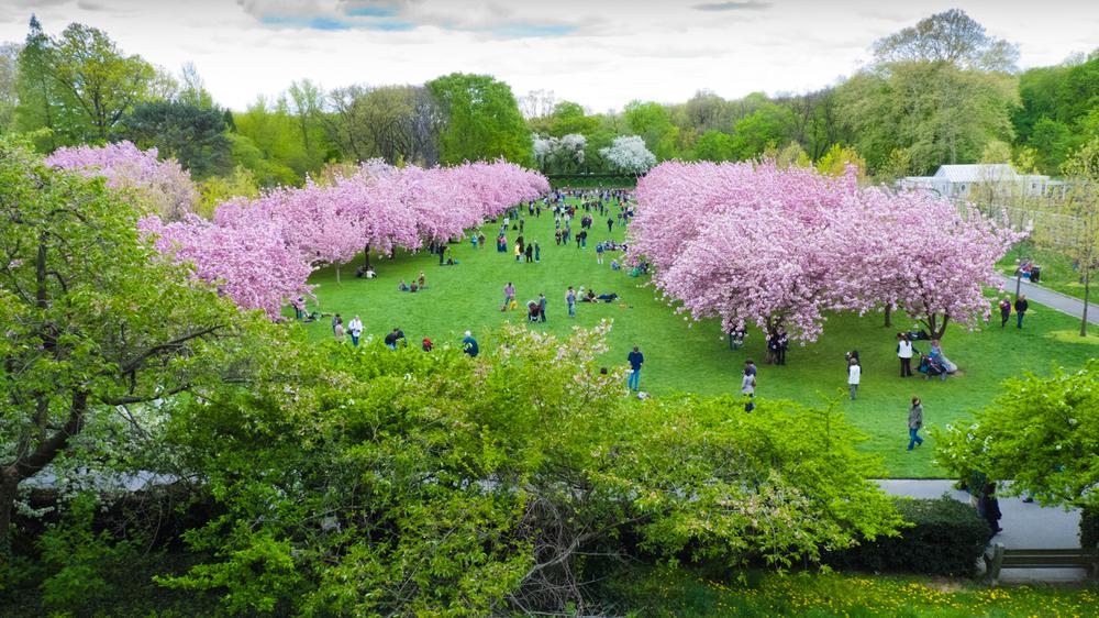 Brooklyn Botanic Garden | Spring 2010