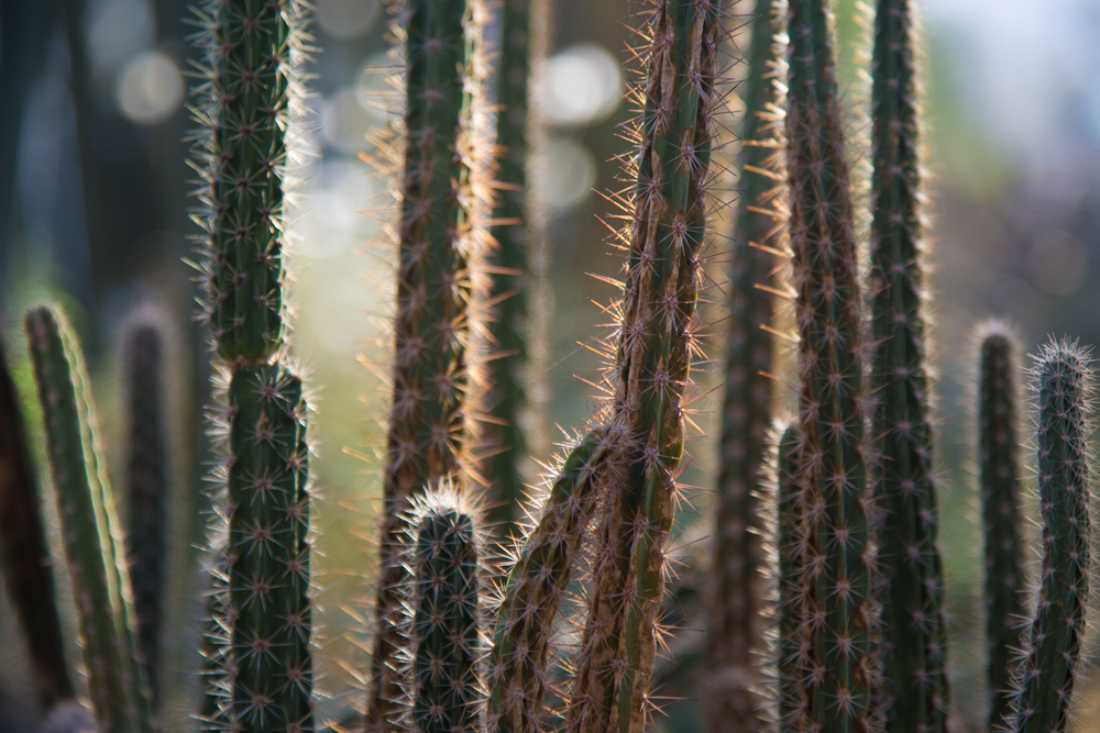 Brooklyn Botanic Garden | Autumn 2014