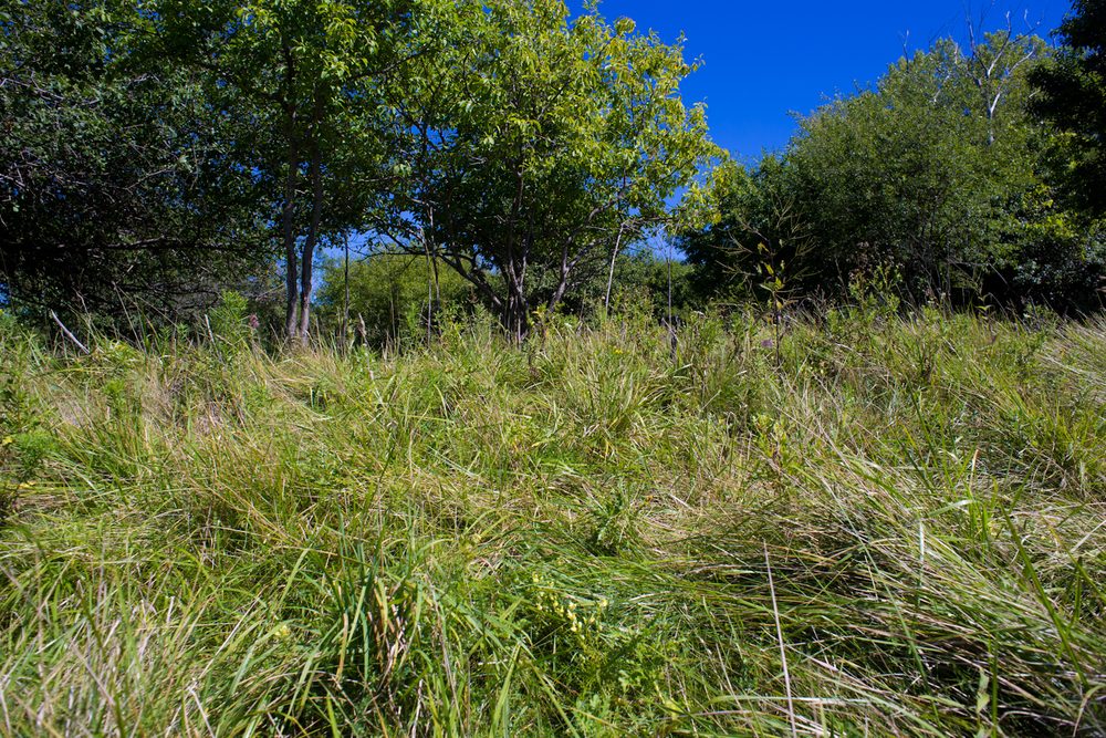 Tifft Nature Preserve, Buffalo | Summer 2014