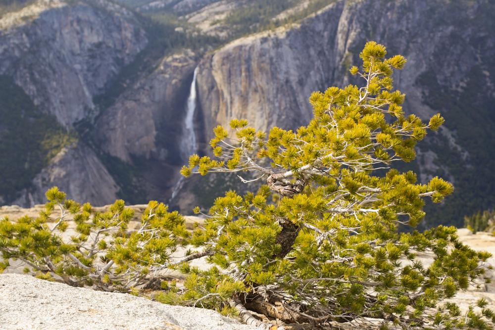Yosemite NP | Spring 2014