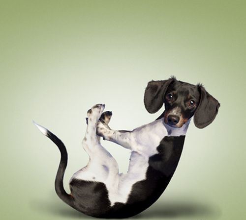 Funny-Dog-Exercise-Graphic.jpg