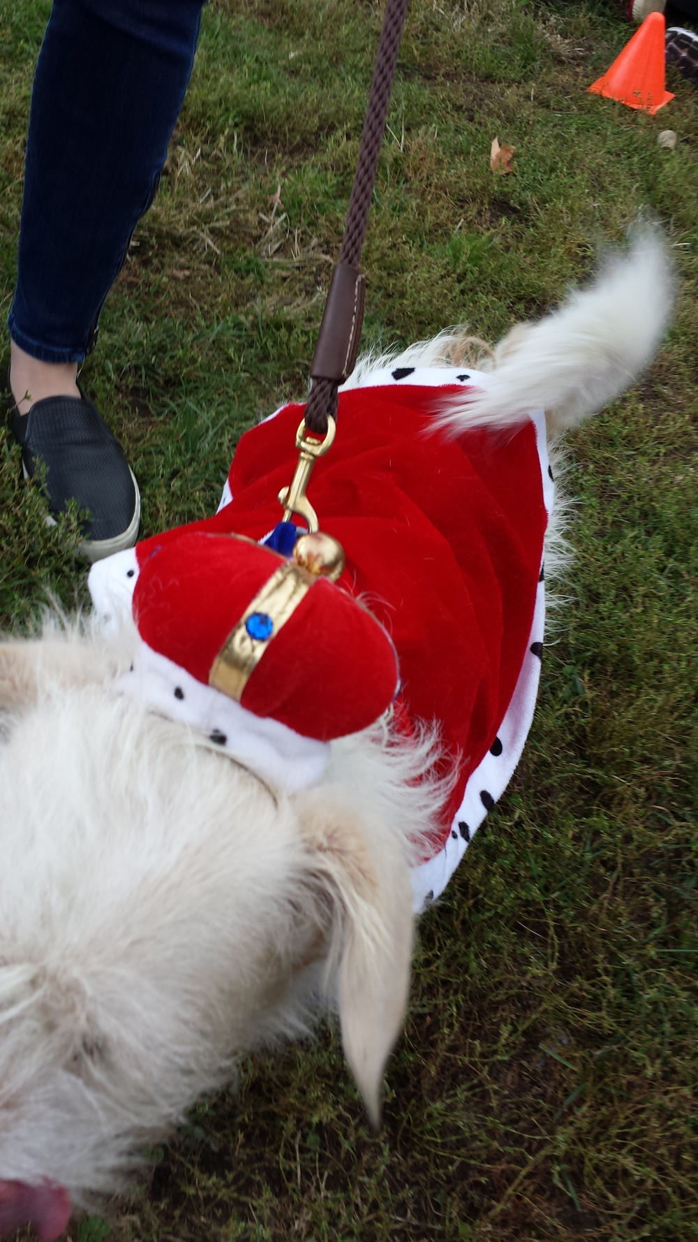 The King (Elroy) came in fourth and won a $50 toward daycare or boarding at  Cheeky Dog Daycare .