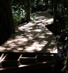 summerbbq5.jpeg