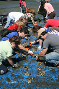summerbbq3.jpeg