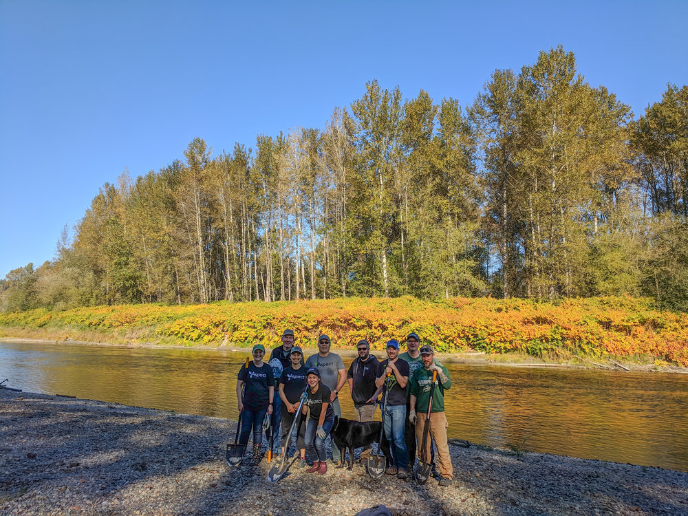 Aspect's volunteer staff donated their day to plant over 900 trees along the Snoqualmie River to help Stewardship Partners and Carnation Farms.