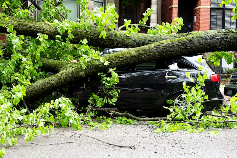 The fallen trees mercilessly crushed a parked SUV.