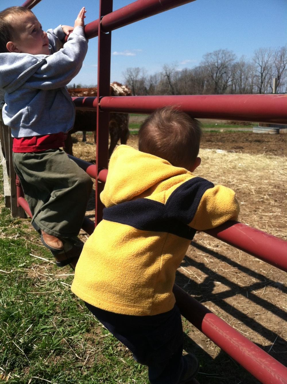 Future farmers.