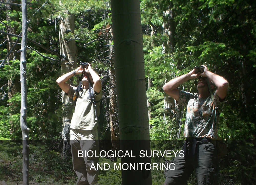 biological surveys and monitoring