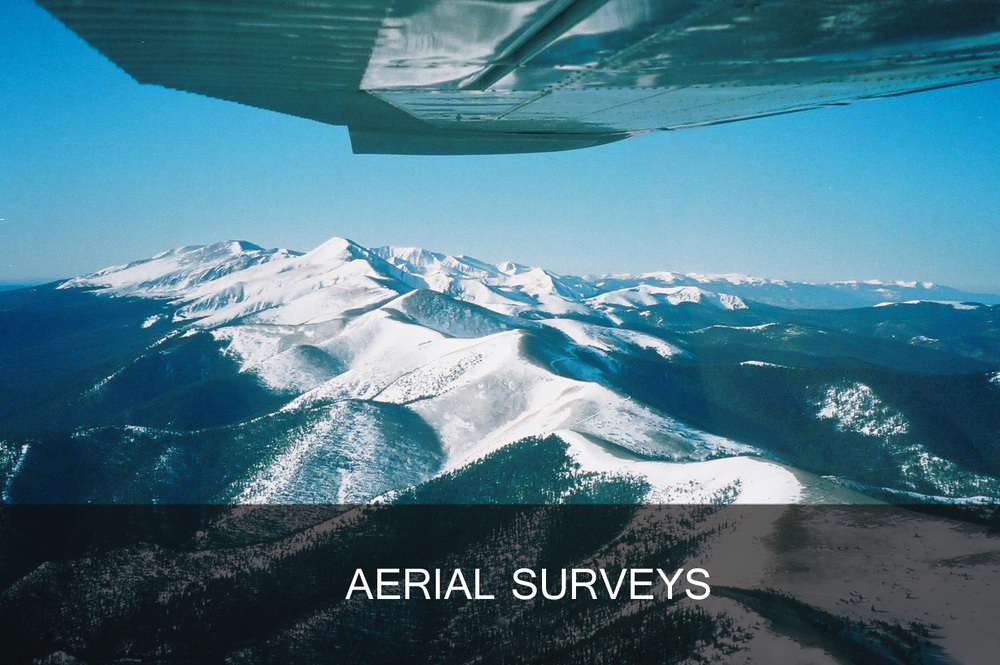 aerial surveys