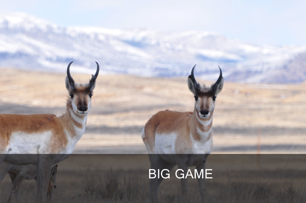 BigGame_Banner - Copy.jpg